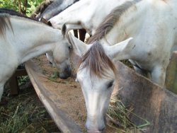 Roatan Horseback Ride Excursion